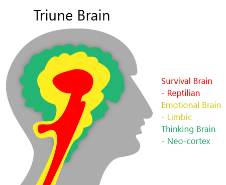 brain based cognitive-behavioral christian transformation